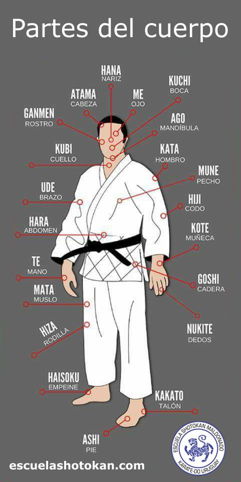 Vocabulario Esquemas Gráficos Academia De Karate Escuela Shotokan Maldonado